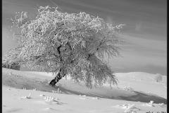 Les Brasses en hiver